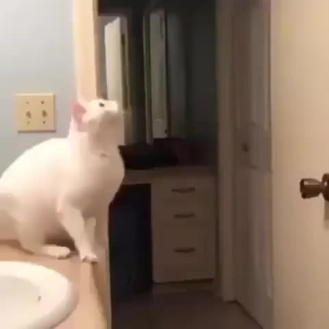 Watch this cat GIF by Subterfug3 (@subterfug3) on Gfycat. Discover more cat, funny GIFs on Gfycat