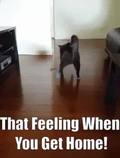 Watch this trending GIF by @applebars on Gfycat. Discover more animalgifs, aww, cat, catgifs, funny, funnygifs, happy, home, relax GIFs on Gfycat
