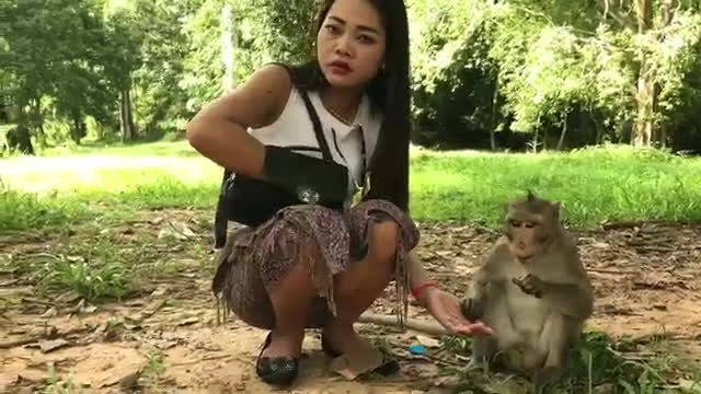 Monkey meeting tourist and Crazy monkey play game with girl GIFs